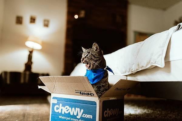 靠人工智慧合成貓星人?!網友看完大笑,果然貓咪是液體!