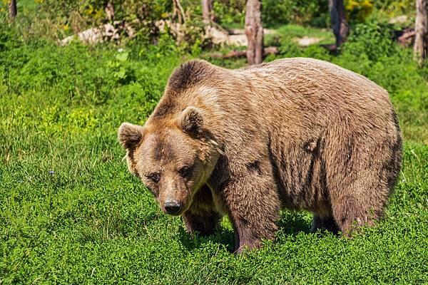 人工智慧再度刷新三觀!連熊臉也能輕鬆辨識?!
