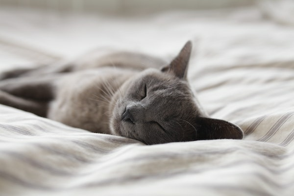 sleeping-cat-1.jpg