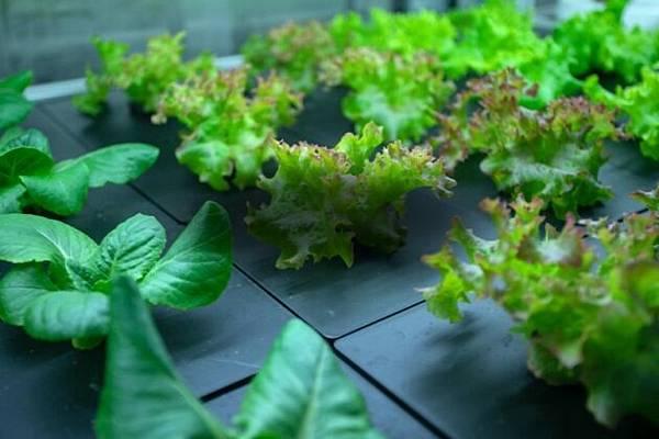 boom-grow-farms-precision-farming-630x420-1.jpg