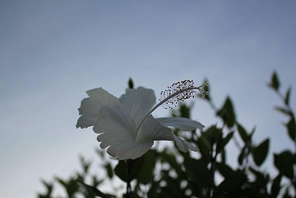 野花(上濾光鏡)