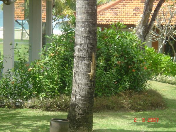 バリ島200708 056.jpg