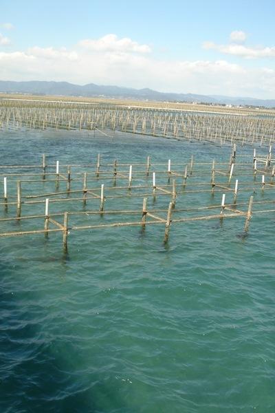 濱名湖的養殖業相當發達