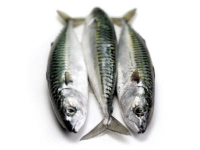 Mackerel-1