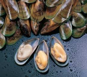mussel-1