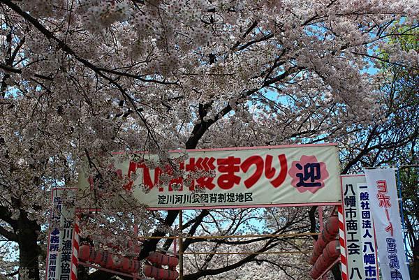 日本賞櫻自由行 (339)