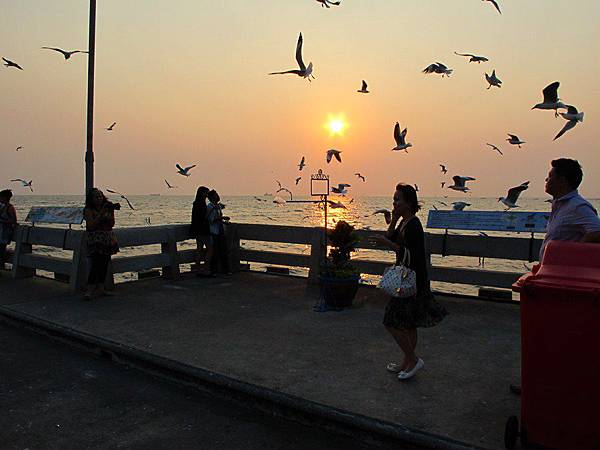 Bang Pu Seaside Resort 觀夕陽、餵海鳥