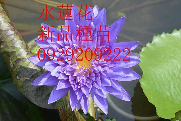 DSC_8498 - 複製_副本