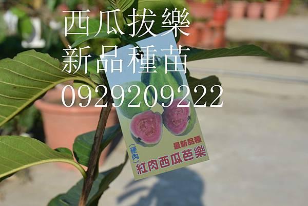 DSC_8645_副本