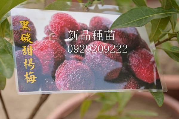 DSC_8920_副本