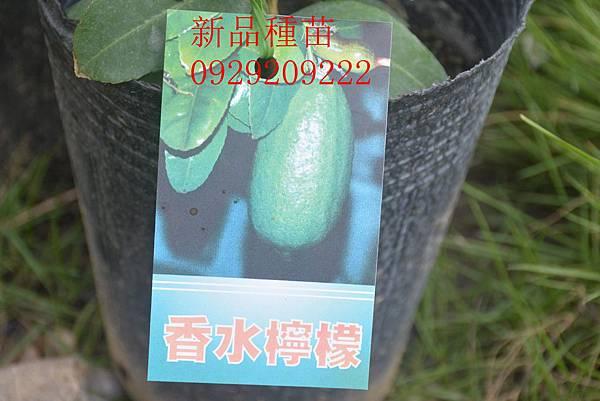 DSC_8927_副本