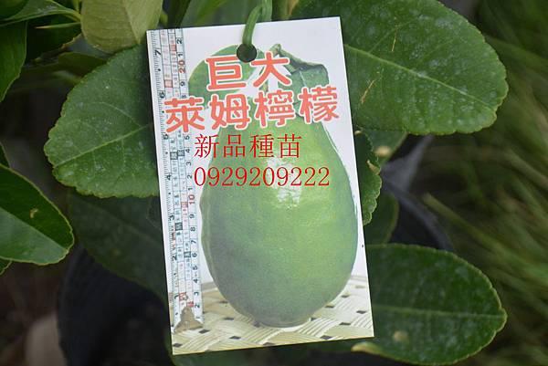 DSC_8928_副本