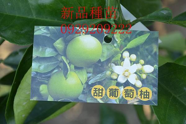 DSC_8682_副本