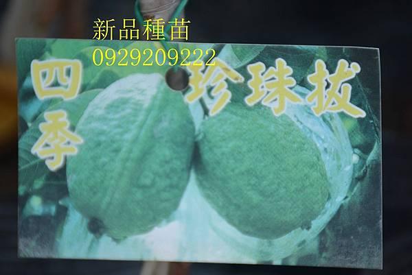 DSC_9011_副本.jpg
