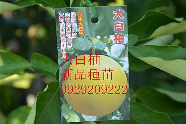 DSC_8672_副本.jpg