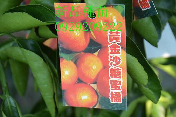 DSC_8671_副本.jpg