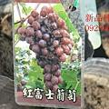 DSC_8958_副本.jpg