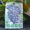DSC_8962_副本.jpg