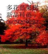20110324012343411_6769[1]_副本.jpg