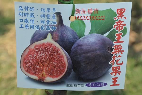 DSC_9988_副本