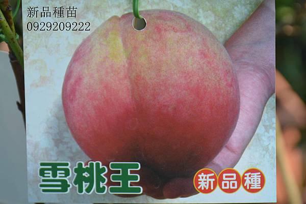 DSC_9953_副本