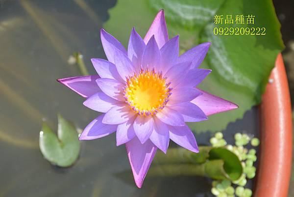 DSC_8495 - 複製_副本