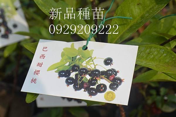 DSC_8953_副本