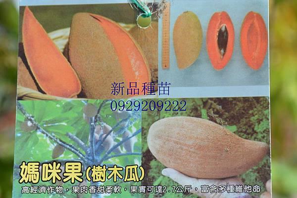 DSC_8992_副本
