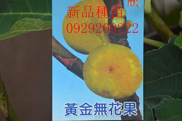 DSC_8977_副本