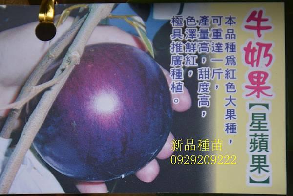 DSC_0535_副本