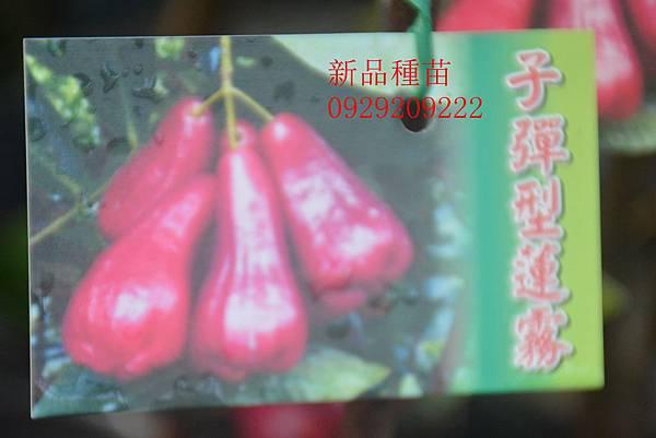 DSC_0645_副本