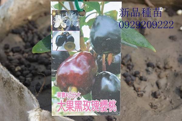 DSC_8986_副本