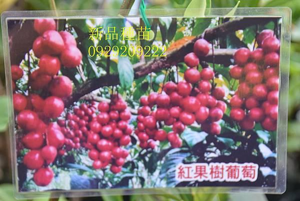 DSC_1412_副本