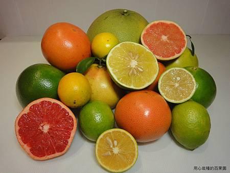 柑桔類水果