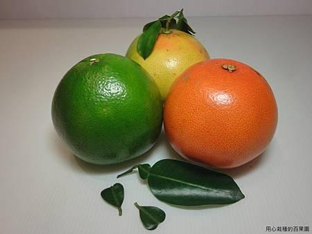 葡萄柚家族