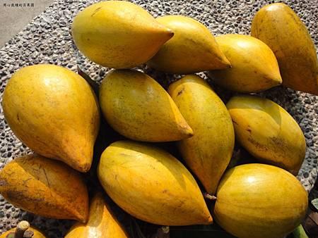 蛋黃果(仙桃)
