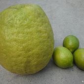 巨無霸檸檬