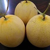 鳳仙洋香瓜