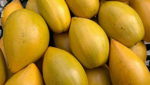 老欉蛋黃果(仙桃)