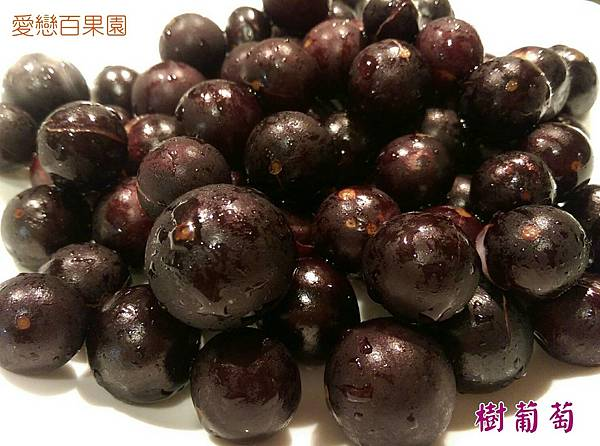 老欉樹葡萄