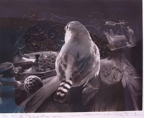 時空之鳥-沈金源