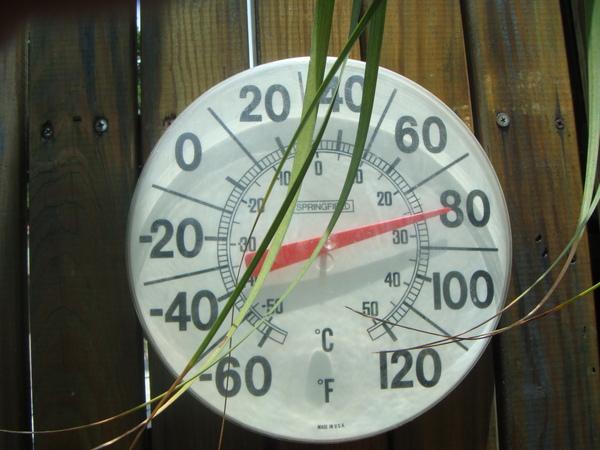 門口樹旁還放了個溫度計