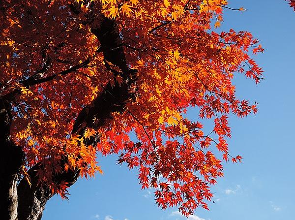 秋季旅遊景點推薦1