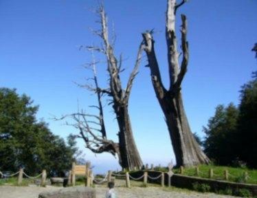夫妻樹-001.jpg