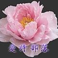 永緣牡丹紫.jpg