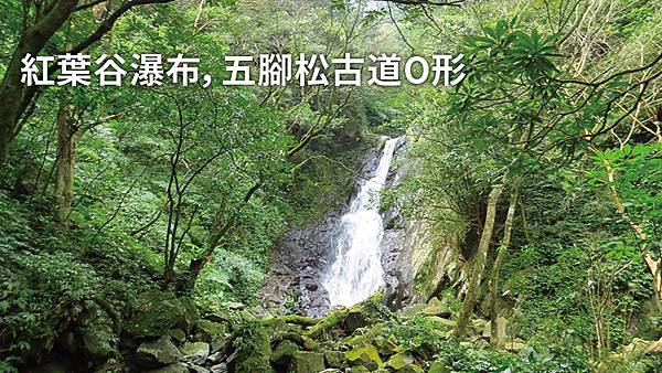 紅葉谷瀑布,五腳松古道O形.jpg
