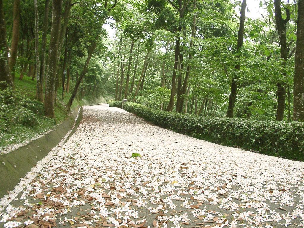 三峽鳶山步道
