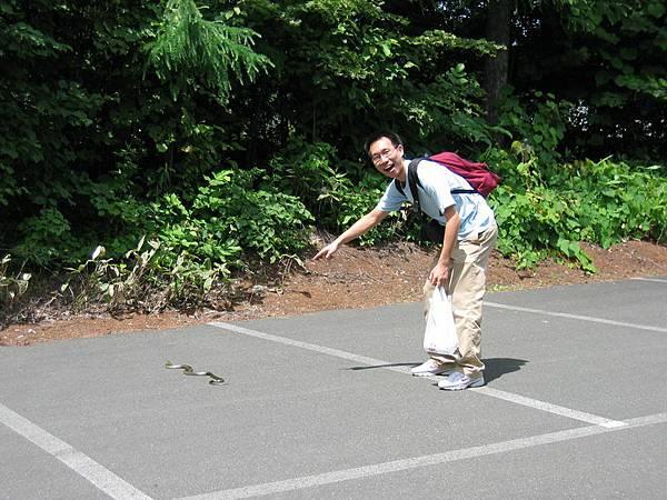 路邊不知名的日本蛇