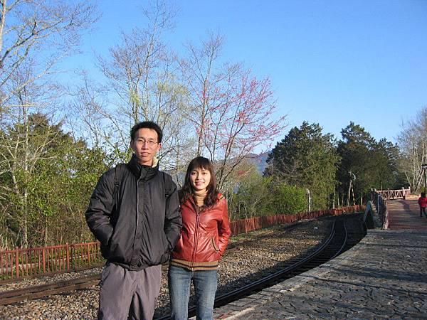 鐵路旁稀疏的山櫻花
