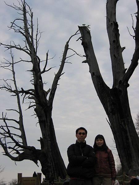 「夫妻樹」,應該是因為剛好只有這兩棵樹吧